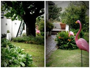Lindy follow the flamingos